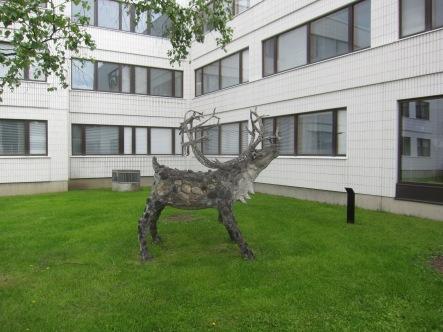 Rovaniemi Reindeer 5